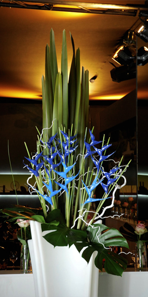 HELICONIA´S SAPPHIRE